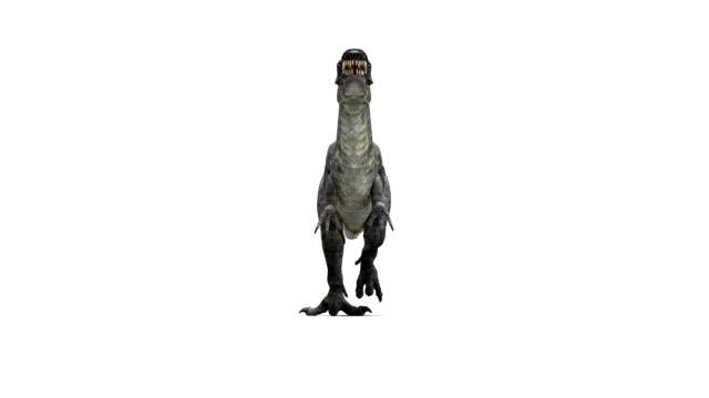 Suchomimus dinosaur walking