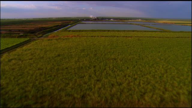 AERIAL, Sugar cane fields and sugar refinery, Florida, USA