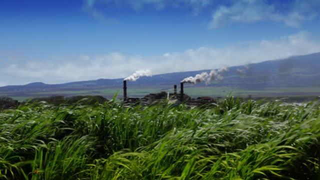 Sugarcane Field and Refinery (Hawaii)