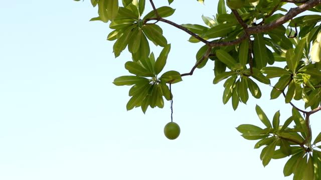 Suicide tree.