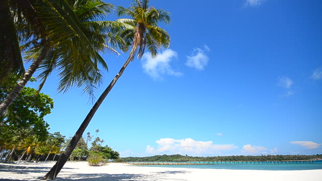 Summer Beach with Coconut Palm Tree