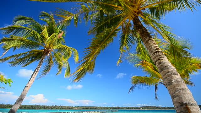 Summer Beach with Coconut Palm Trees
