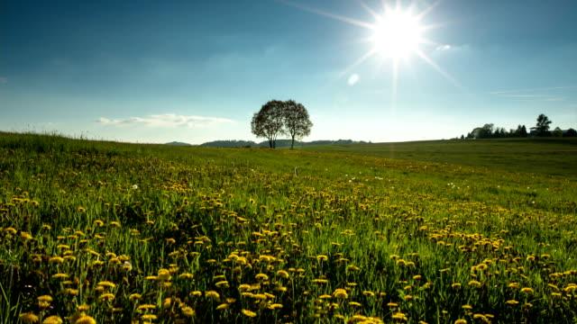 CRANE UP: Summer Meadow