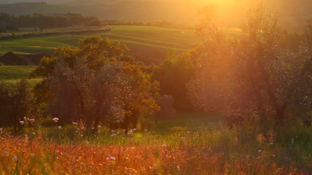 summer sunset in tuscany, trees and meadow
