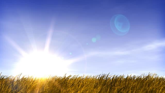 Summertime Field of Grass and Sunset