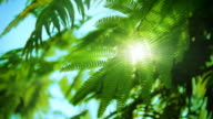 Sun and green leaves