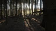 T/L Sun behind coniferous trees
