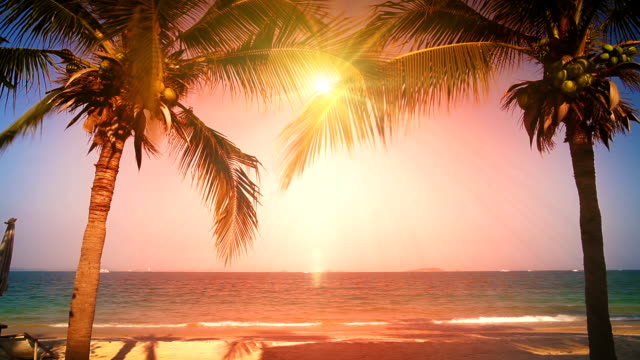 sun between two palms on the beach
