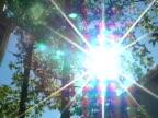 Sun flare through tree (NTSC)