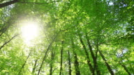 Sun in the Forest, HD Video