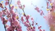 Sun in the spring