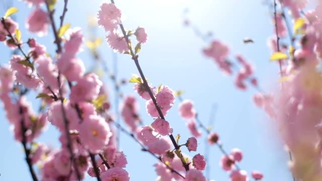 Sun in het voorjaar