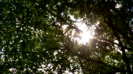 BRIGHT Sun light glare coming through green leaves trees Summer hot heat forest