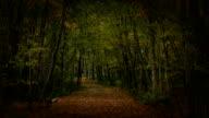 Sun Lit Walking Path
