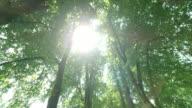 SLO MO zon gluren door middel van de boom-Laan