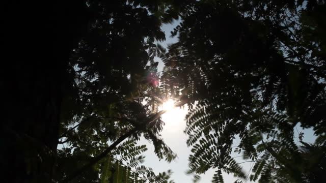 Sun rays passing on leaf of tree