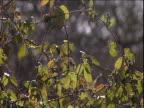 Sun shines on brambles in woodland UK