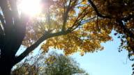 Zon schijnt door luifel met Herfstbladeren