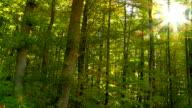 POV Sun Shining Through Green Forest Tracking Shot