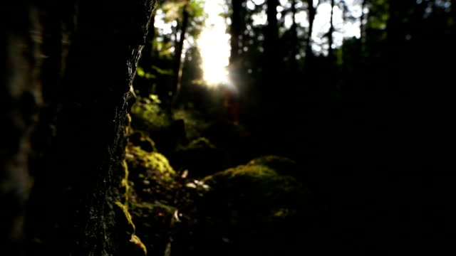 Sun Shining Through Mystic Forest