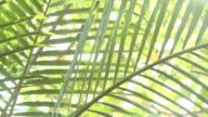 MS Sun shining through palm frawn / Haleiwa, Hawaii, United States