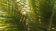 CU Sun shining through palm leaves / Nosy Be, Madagascar