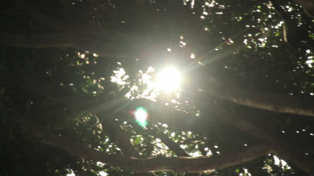 Sun Shining Through Tree Canopy