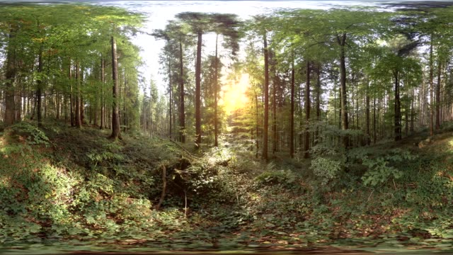 360 VR, sun shining through trees in forest