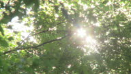 sun shining through trees, pollen flying through air