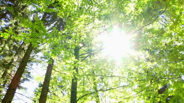 PAN Sonne scheint durch die Baumwipfel