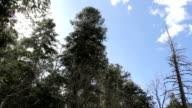 Sun sparkling through trees HD