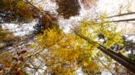 Sun through leaves in autumn.