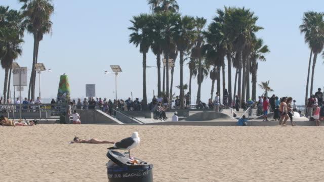 Sunbathing bird and girl on the Venice Beach