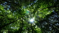 Sunbeam and green trees