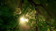 Sunbeam shining between beeches. Mountain forest