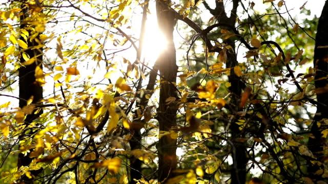 Sonnenstrahl durch herbstliche Zweige