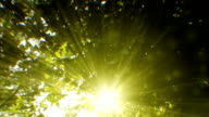 Sunbeams seen through trees (loopable)