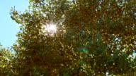Sunburst through early fall leaves Aspens Steens Mountain Near Malhuer Wildlife Refuge 6