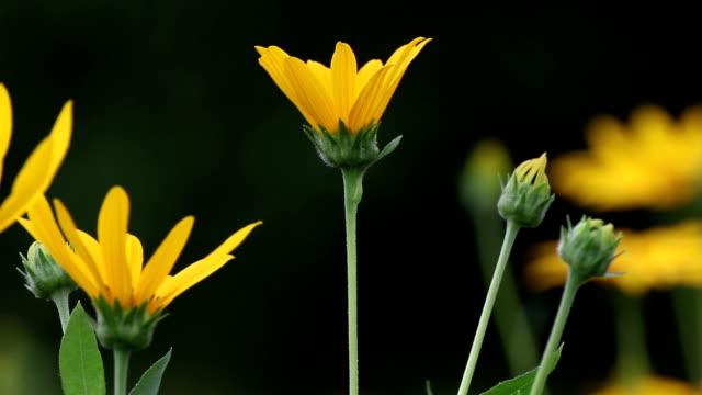 Sunchoke Blumen