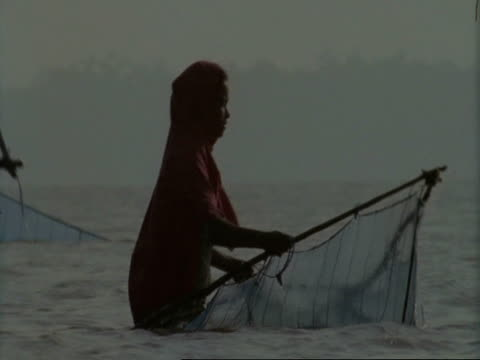 MS Sunderbans, Indian woman net fishing in mangrove swamp, Sunderbans, India