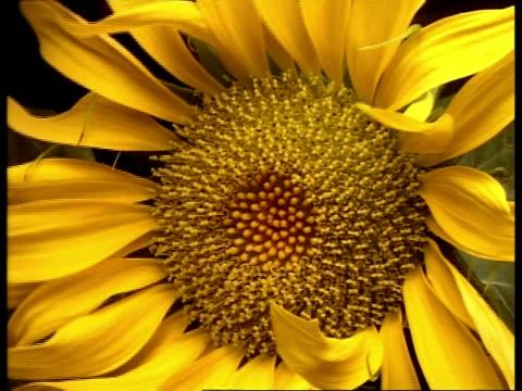 T/L BCU Sunflower closing, camera rotates
