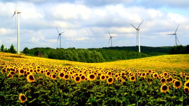 Sunflower Field and Wind Turbines