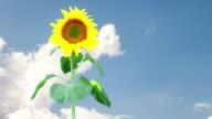 Sonnenblume mit Wolken im Hintergrund
