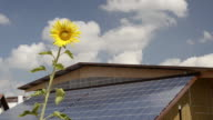 MS Sunflowers in front of solar panels on farmhouse roof  / Mainburg, Bavaria, Germany
