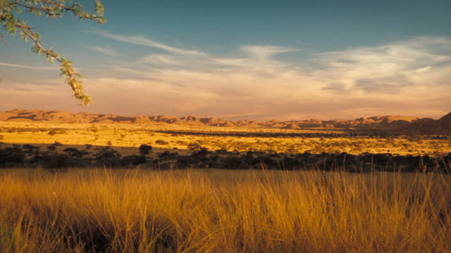 Sunlight casts the Kalahari Desert in a golden glow. Available in HD.