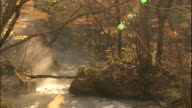 Sunlight filters through autumn trees as steam rises from flowing mountain stream