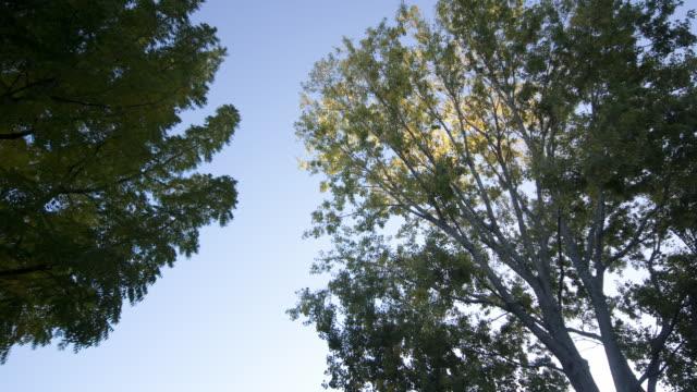 Sunlight filters through treetops in  Rotorua, New Zealand.