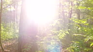 WS Sunlight In The Forest