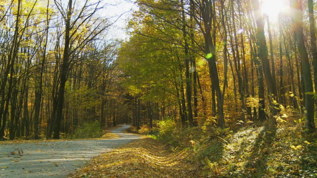 HD DOLLY: Sunlight Over The Forest Road