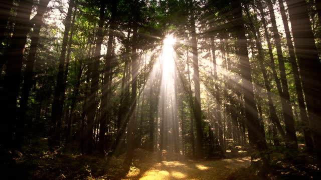 HD - Sunlight penetrating forest